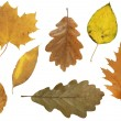 Autumn leafs — Stock Photo #1660679