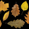 Autumn leafs — Stock Photo #1661197