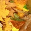 Autumn leafs — Stock Photo #1740497
