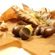 Stock Photo: Autumn leafs and acorns