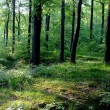 Forest on Pomerania, Poland — Stock Photo