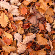 Autumn leafs — Stock Photo #1749307