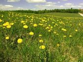 Dandelion on spring meadow — Stock Photo