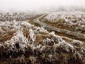 мороз — Стоковое фото