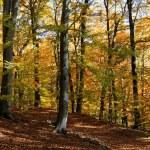 Autumn forest — Stock Photo #1831170