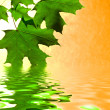 Leaf of the maple are reflected in water — Stock Photo