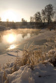 Winter, ice, tree, frost, snow, vapour, fume, exhale, — Stock Photo