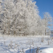 Stock Photo: Sunny day in winter forest