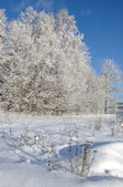 Sunny day in winter forest — Foto de Stock