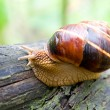 Snail in a Summer Garden 2 — Stock Photo