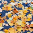 Autumn lives — Stock Photo