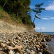 Pine-trees on a beach — Stock Photo #1855458