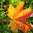 Autumn leaf on green grass — Stock Photo #1855538