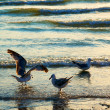 Stock Photo: Segulls on coast