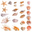 Seashells and starfish collection - Stock Photo