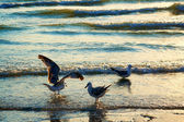 Sea gulls on coast — Stock Photo