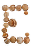 Isolated shell letter E — Stock Photo