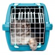 Cat i cage carrier — Stock Photo