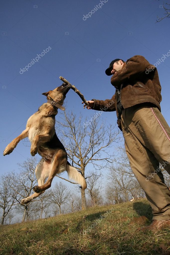 Man playing with dog on the meadow — Stock Photo #1751541