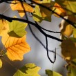 Autumn leaf — Stock Photo #1763818