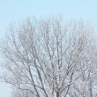 Stock Photo: Snow tree