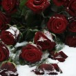 Red rose bouquet in the snow — Stock Photo #1696861