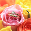 Bridal set on a pink rose — Stock Photo