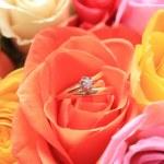 Hochzeit inmitten einer rose — Stockfoto