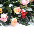 Mixed rose bouquet in the snow — Stock Photo