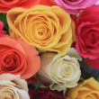 Different colors of roses - 图库照片