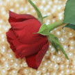 Red rose on pearls — Stock Photo