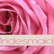 Pink rose card -  bridesmaid - 图库照片