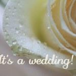 White rose card - invitation — Stock Photo #1697435