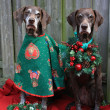 Christmas with pointer sisters — Stockfoto #1698668