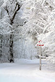 Country road in the winter — Stockfoto