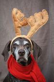 驯鹿圣诞指针 — 图库照片