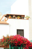 Bougainvillea in front of a house — Stock Photo