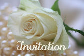 White rose card - print and post - invitation — Stock Photo