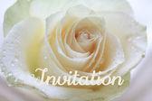 Bílá růže karta - pozvánka — Stock fotografie