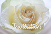 White rose card - invitation — Zdjęcie stockowe