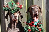 Jul med pekaren systrarna — Stockfoto