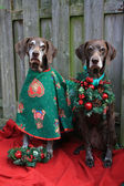 Christmas with the pointer sisters — Stockfoto