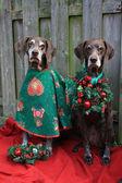Natale con le sorelle del puntatore — Foto Stock