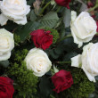 White and red roses — Stock Photo