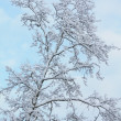 Winter tree — Stock Photo #1713757
