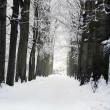Forest road in winter — Foto Stock #1714065