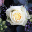 Foto Stock: White rose with snow crystals