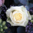 Stock Photo: White rose with snow crystals