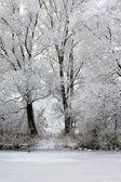 White fairytale landscape — Stock Photo
