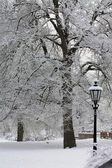 Dépoli arbres dans un paysage d'hiver — Photo